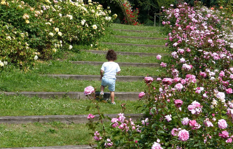 Photo wallpaper Park, roses, girl