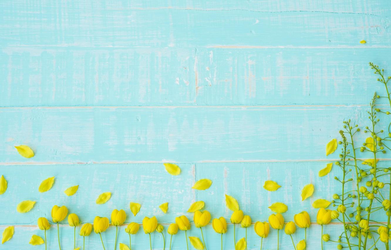 Photo wallpaper flowers, background, tree, blue, Board, yellow, petals, yellow, wood, blue, flowers, petals