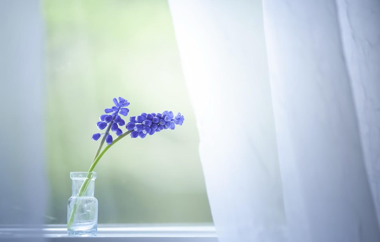 Photo wallpaper flowers, house, window