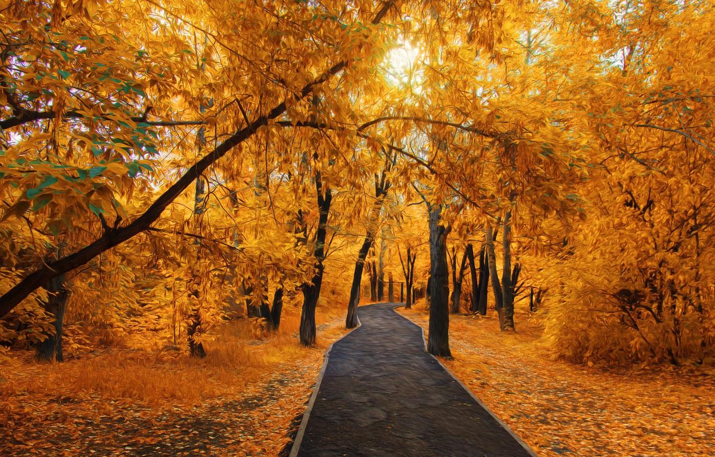 Photo wallpaper Park, walking, Golden autumn, Temirtau