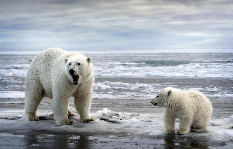 Photo wallpaper sea, nature, bears