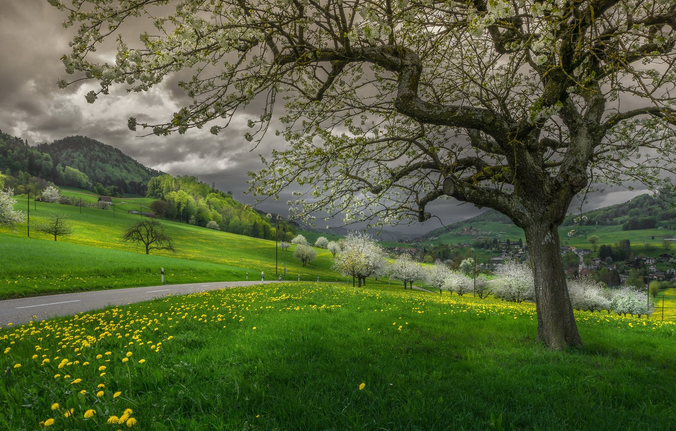 Photo wallpaper spring, Switzerland, Forest castle, The Canton Of Basel-Country