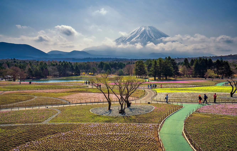 Photo wallpaper Japan, mount Fuji, Fuji Shibazakura