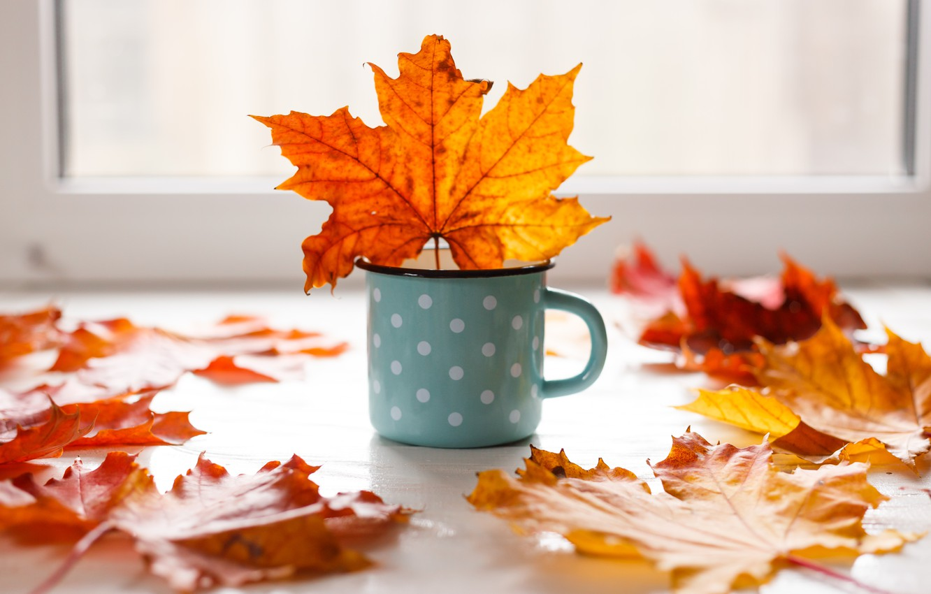 Photo wallpaper autumn, leaves, background, colorful, mug, maple, yellow, wood, autumn, leaves, mug, maple
