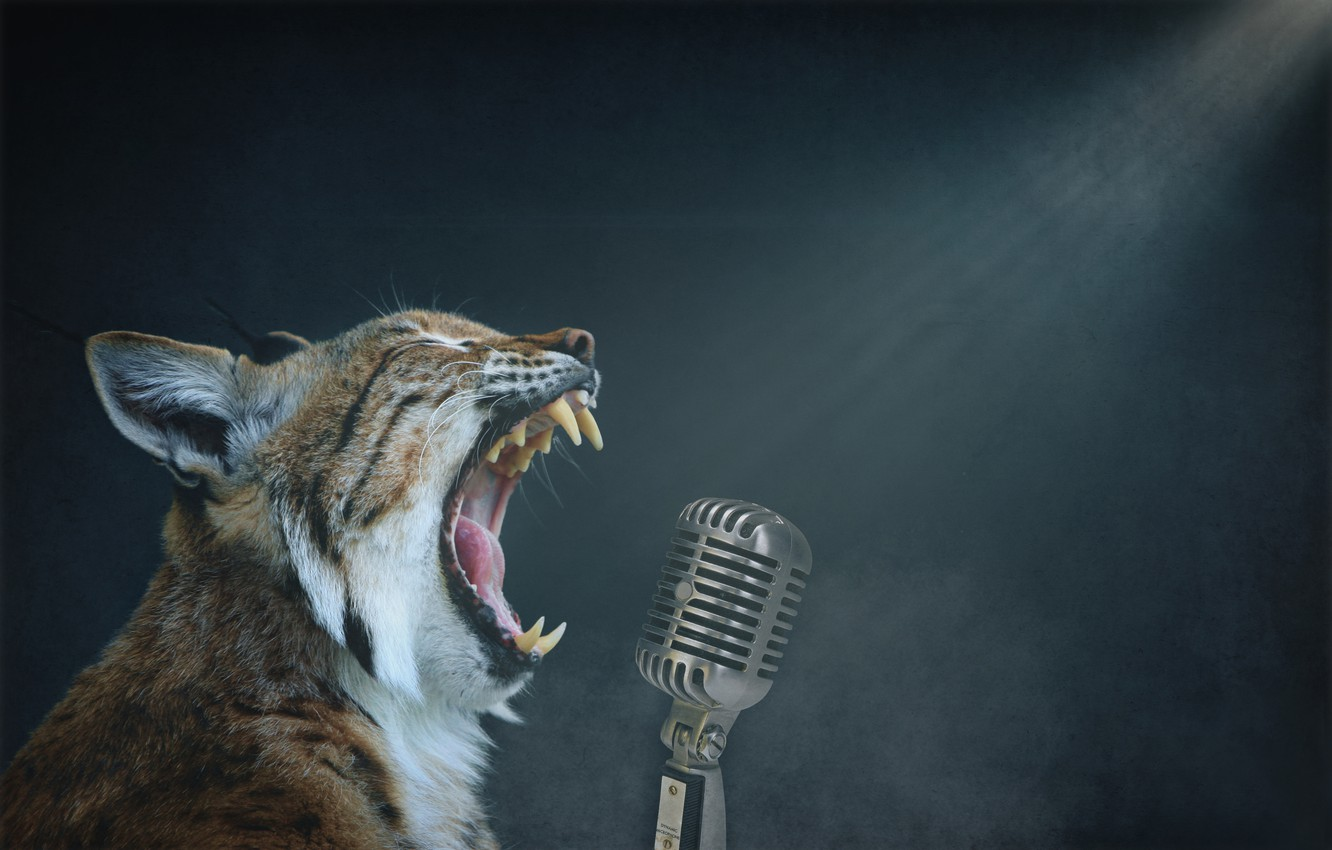 Photo wallpaper background, microphone, lynx, singing