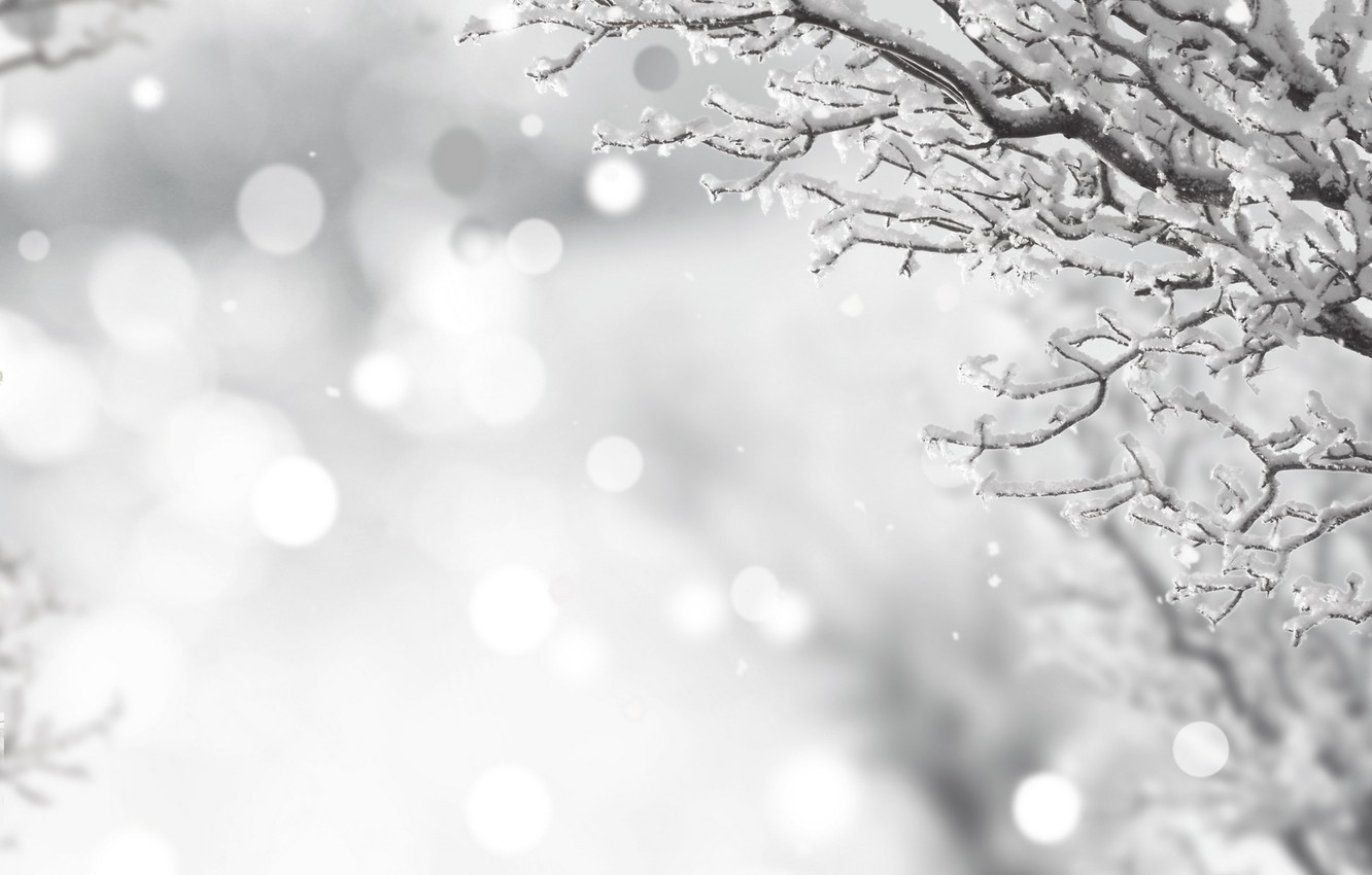 Wallpaper Winter Frost Snow Branches Black And White Winter