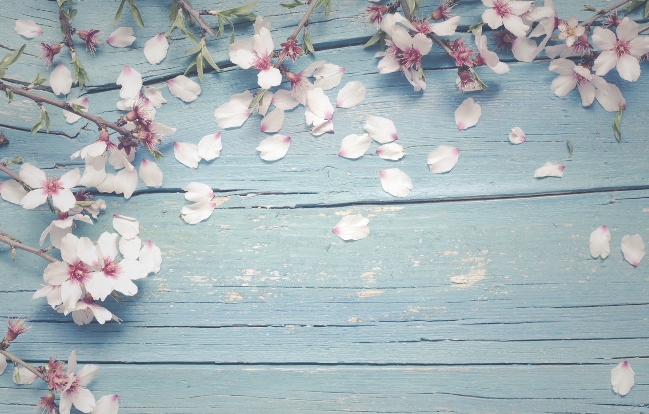 Photo wallpaper flowers, branches, apple, spring, Apple, flowering, wood, blossom, flowers, spring