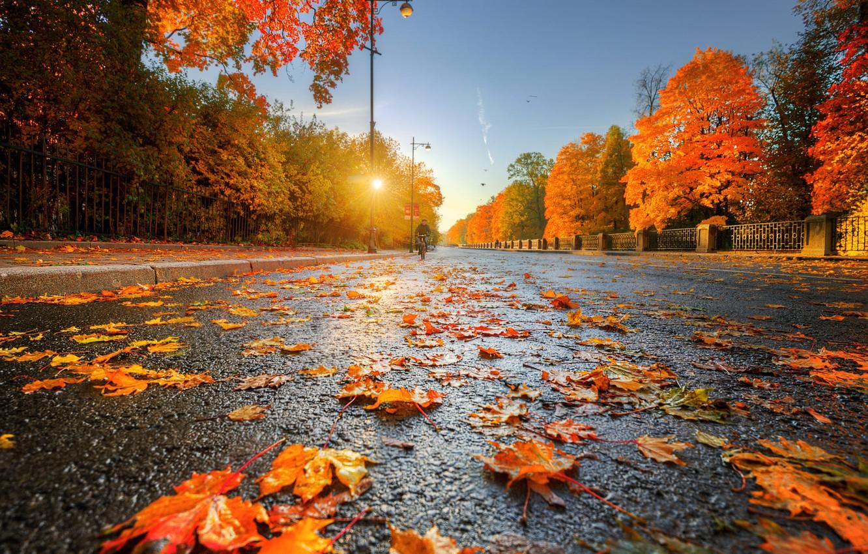 Photo wallpaper Golden autumn, Ed Gordeev, Tsarskoye Selo, the road into the distance