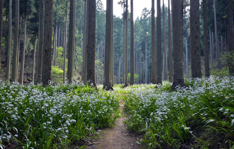 Photo wallpaper forest, summer, flowers