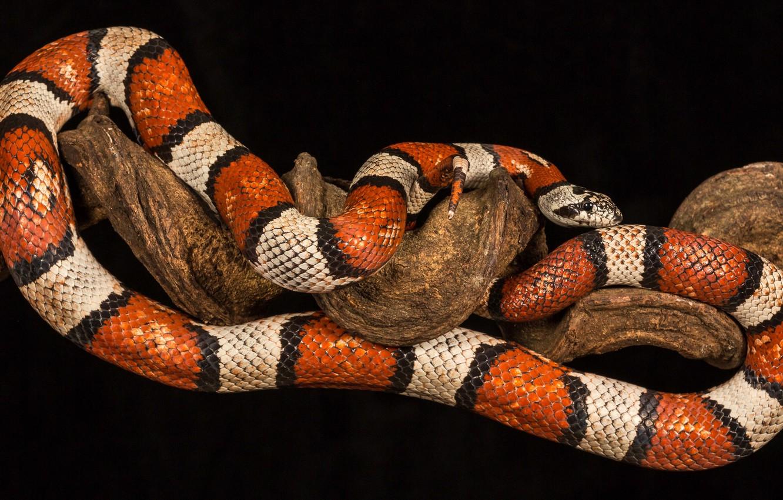 Photo wallpaper night, snake, branch