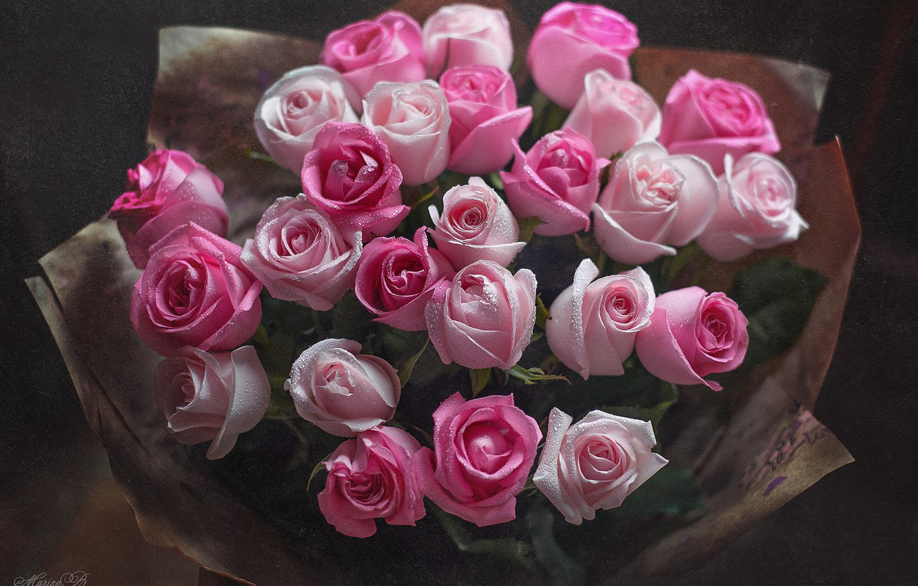 Photo wallpaper drops, roses, bouquet, pink, buds, Marina Baccardi