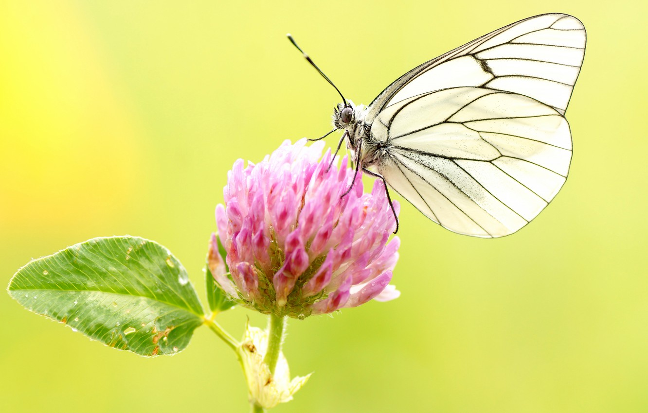 Wallpaper Macro Background Flower Pink Butterfly Insect
