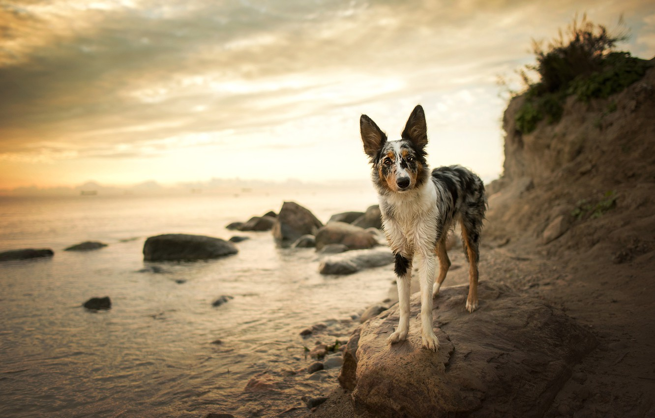 Photo wallpaper beach, the sky, look, face, clouds, nature, pose, stones, background, shore, dog, walk, pond, the …