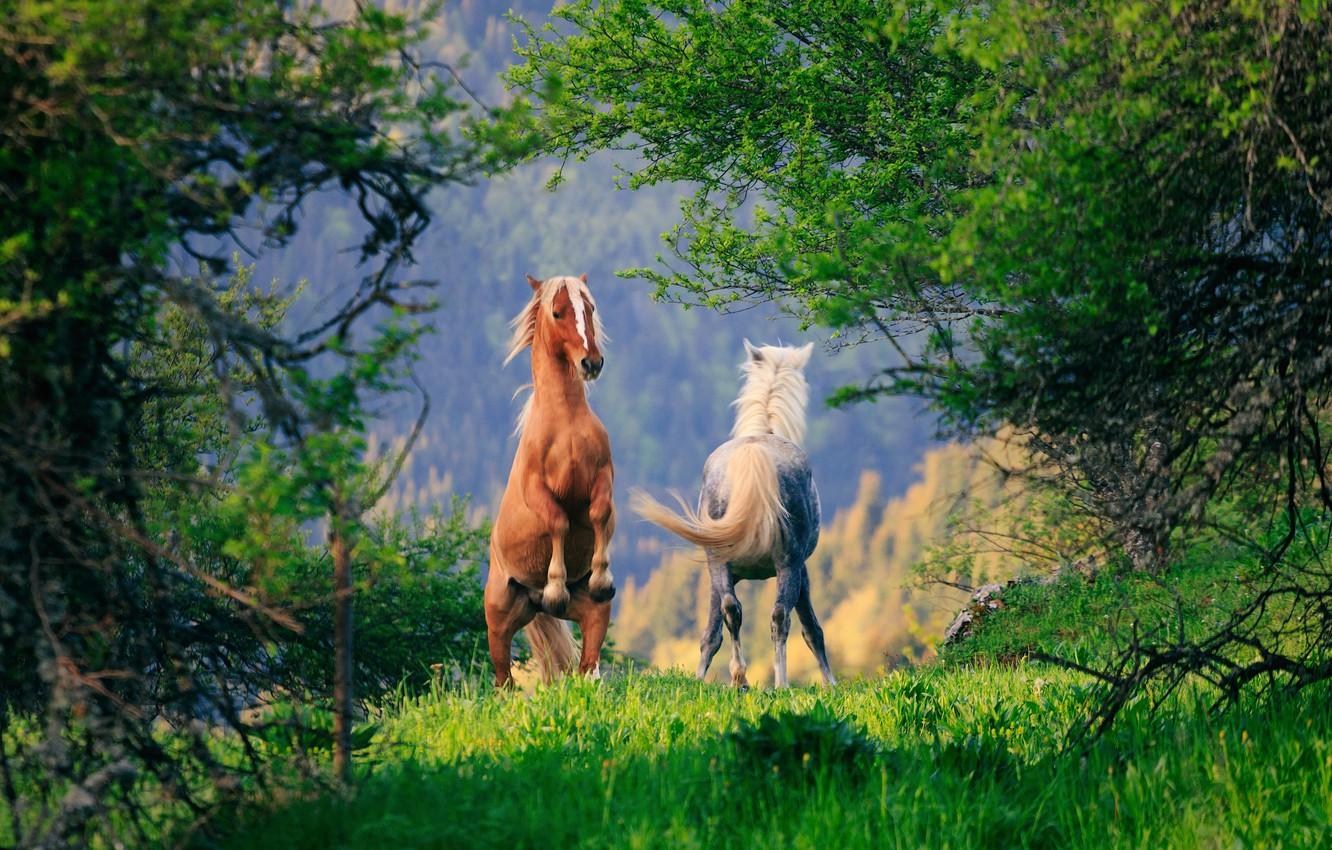 Photo wallpaper trees, horse, horse, pair
