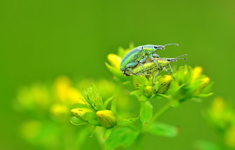 Photo wallpaper flower, macro, photo, bugs
