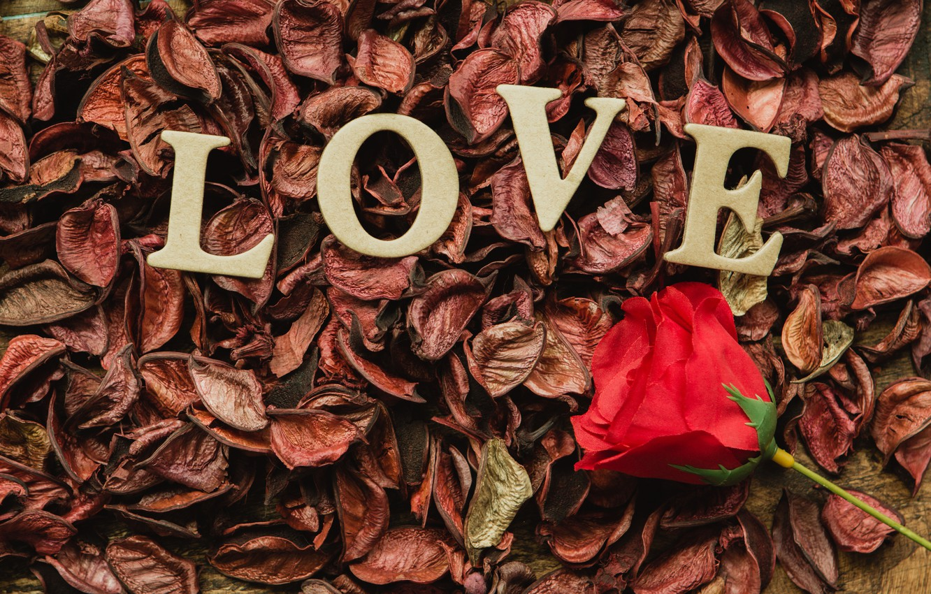 Photo wallpaper letters, holiday, rose, Valentine's day