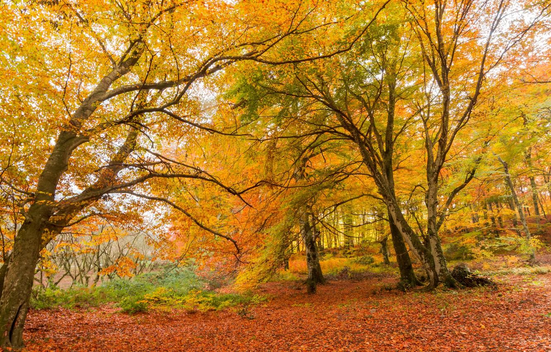 Photo wallpaper autumn, leaves, trees, bridge, Park, forest, nature, yellow, park, autumn, leaves, tree