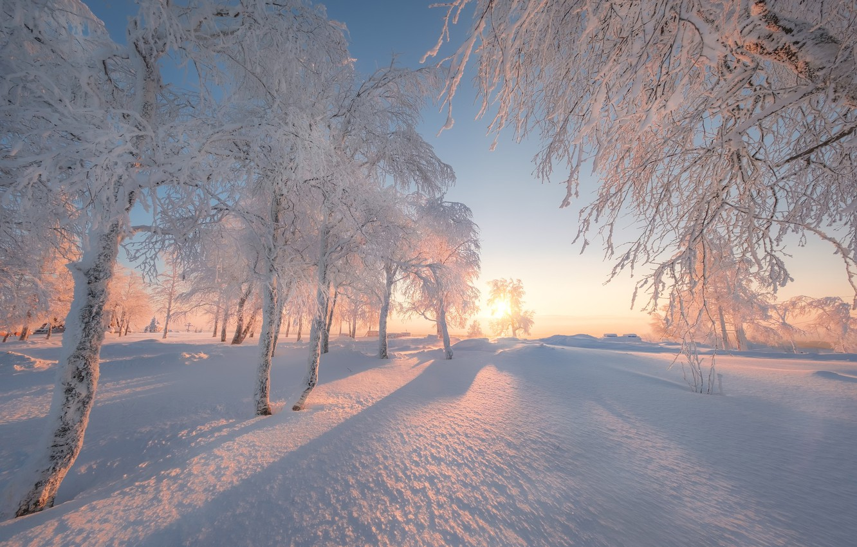Photo wallpaper winter, snow, trees, dawn, morning, Russia, Perm Krai, White mountain