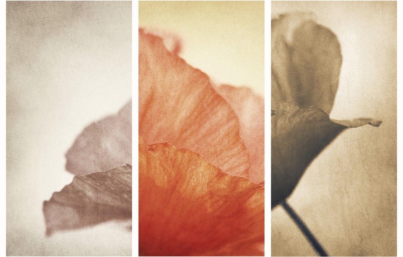 Photo wallpaper flowers, Mac, photos picture