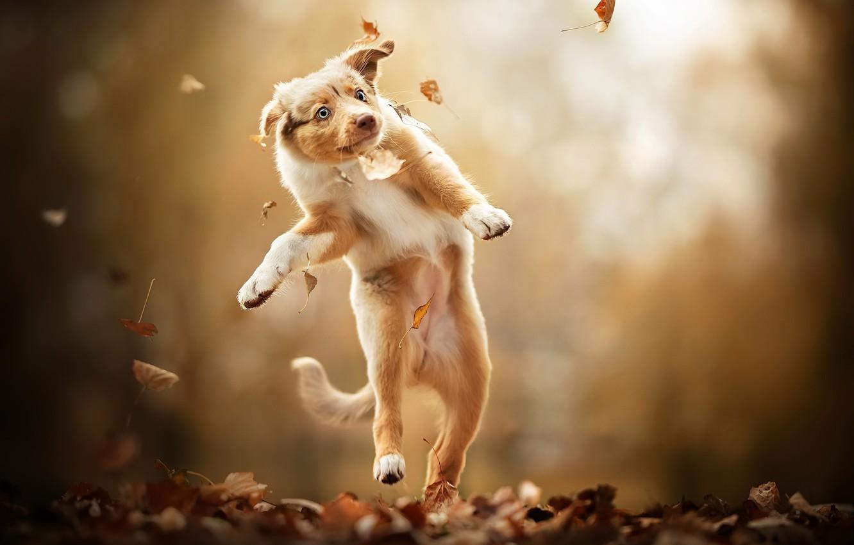 Photo wallpaper autumn, nature, dog
