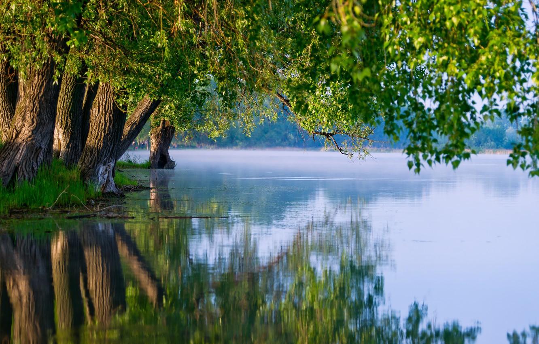 Photo wallpaper summer, trees, nature, lake, reflection
