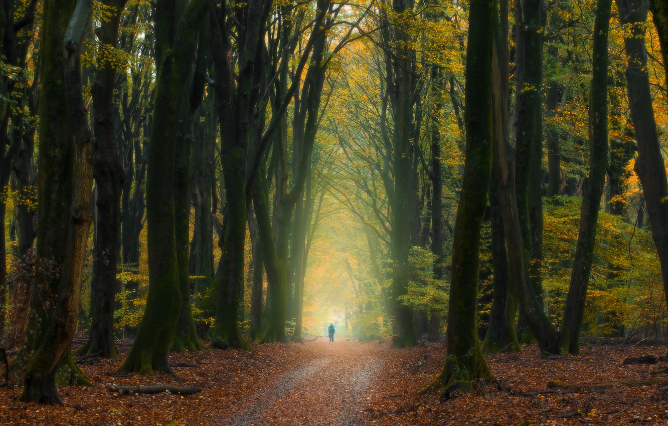 Photo wallpaper autumn, forest, trees, people, Netherlands, fallen leaves