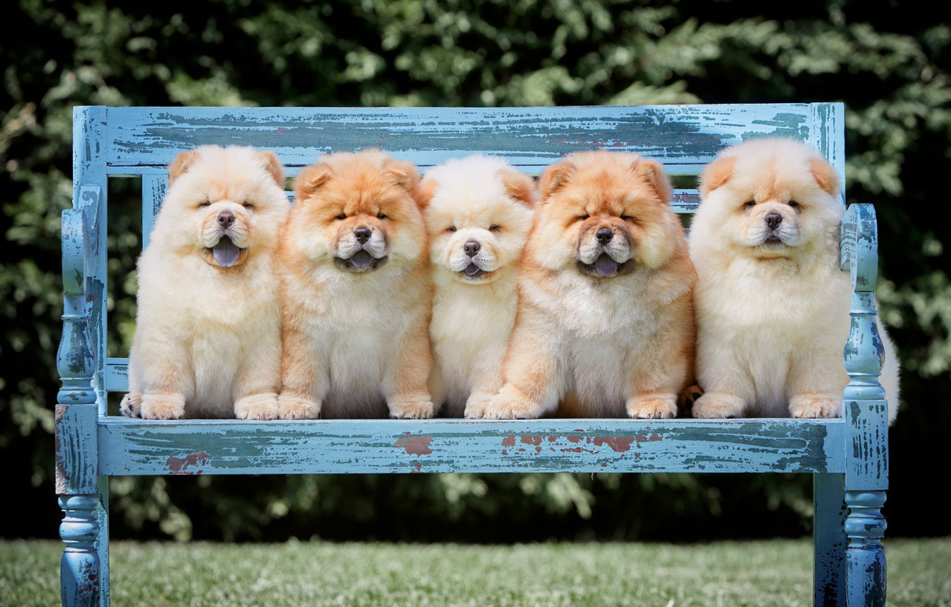 Wallpaper Language Dogs Summer Bench Branches Nature Pose Park Lawn Puppies Shop Puppy Fluffy Kids Company Friends Images For Desktop Section Sobaki Download