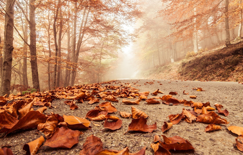 Photo wallpaper road, autumn, leaves, fog