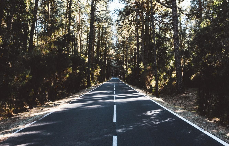 Photo wallpaper road, trees, nature, markup, dal