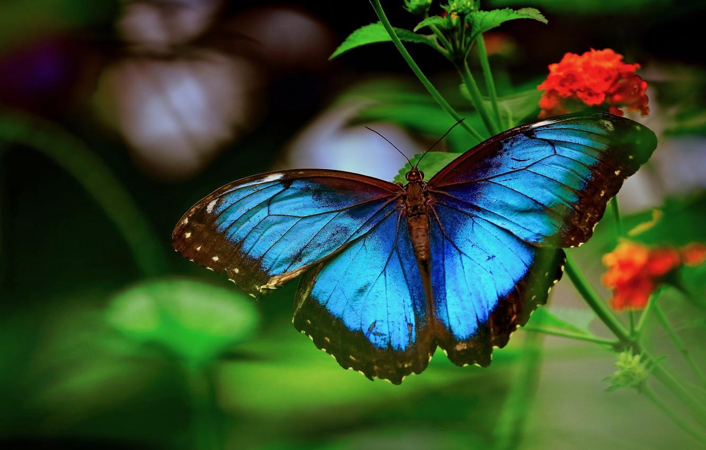 Photo wallpaper macro, flowers, nature, stems, butterfly, morpho