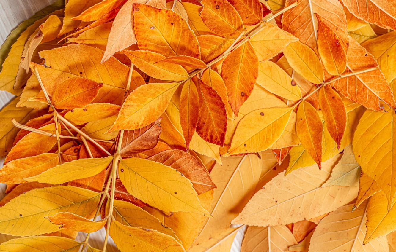 Photo wallpaper autumn, leaves, photo