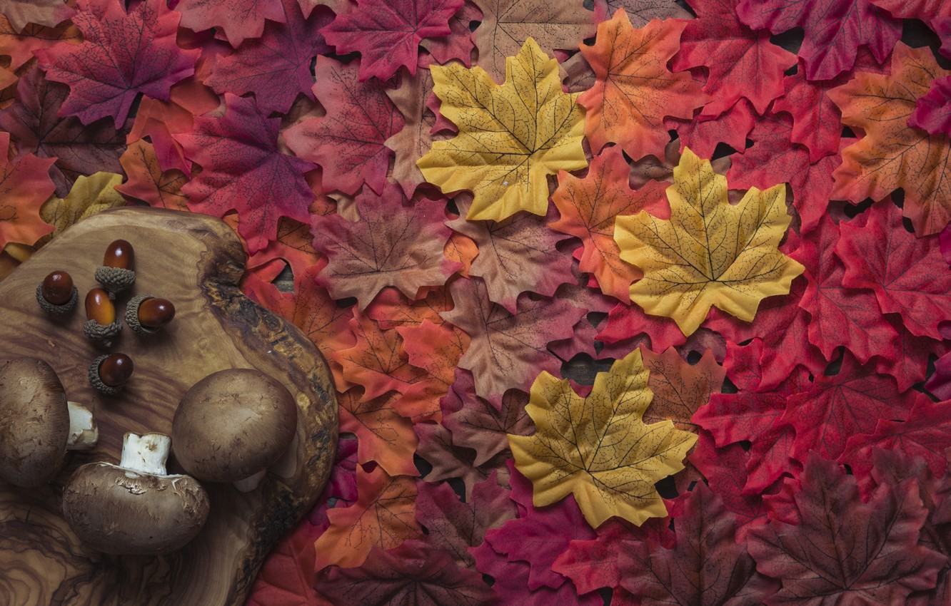 Photo wallpaper autumn, leaves, background, tree, mushrooms, colorful, red, Board, maple, wood, background, autumn, leaves, autumn, maple
