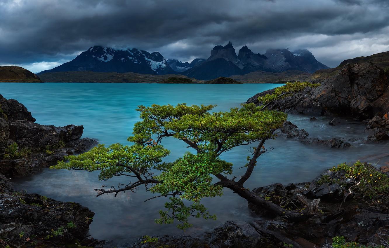 Photo wallpaper mountains, lake, tree, rocks, Chile, Chile, Patagonia, Patagonia, Lake Pehoe, Torres del Paine National Park, …