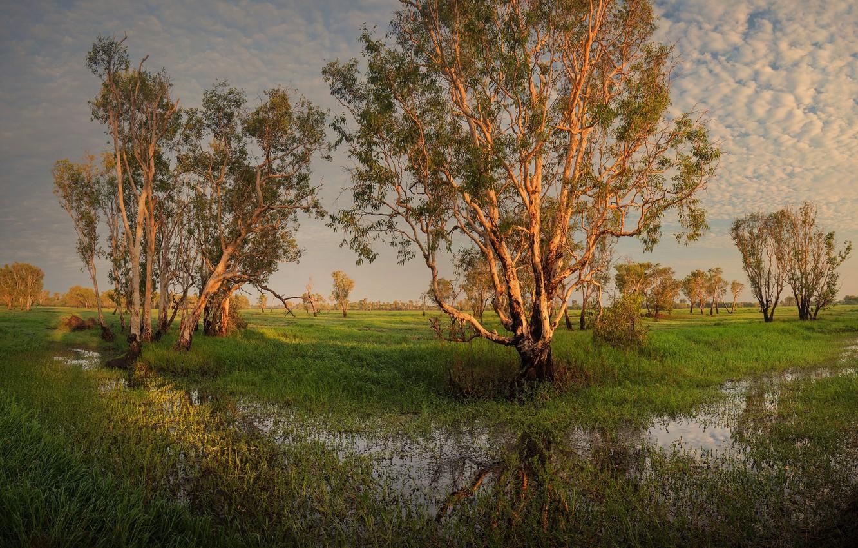 Photo wallpaper trees, landscape, nature, beauty, space