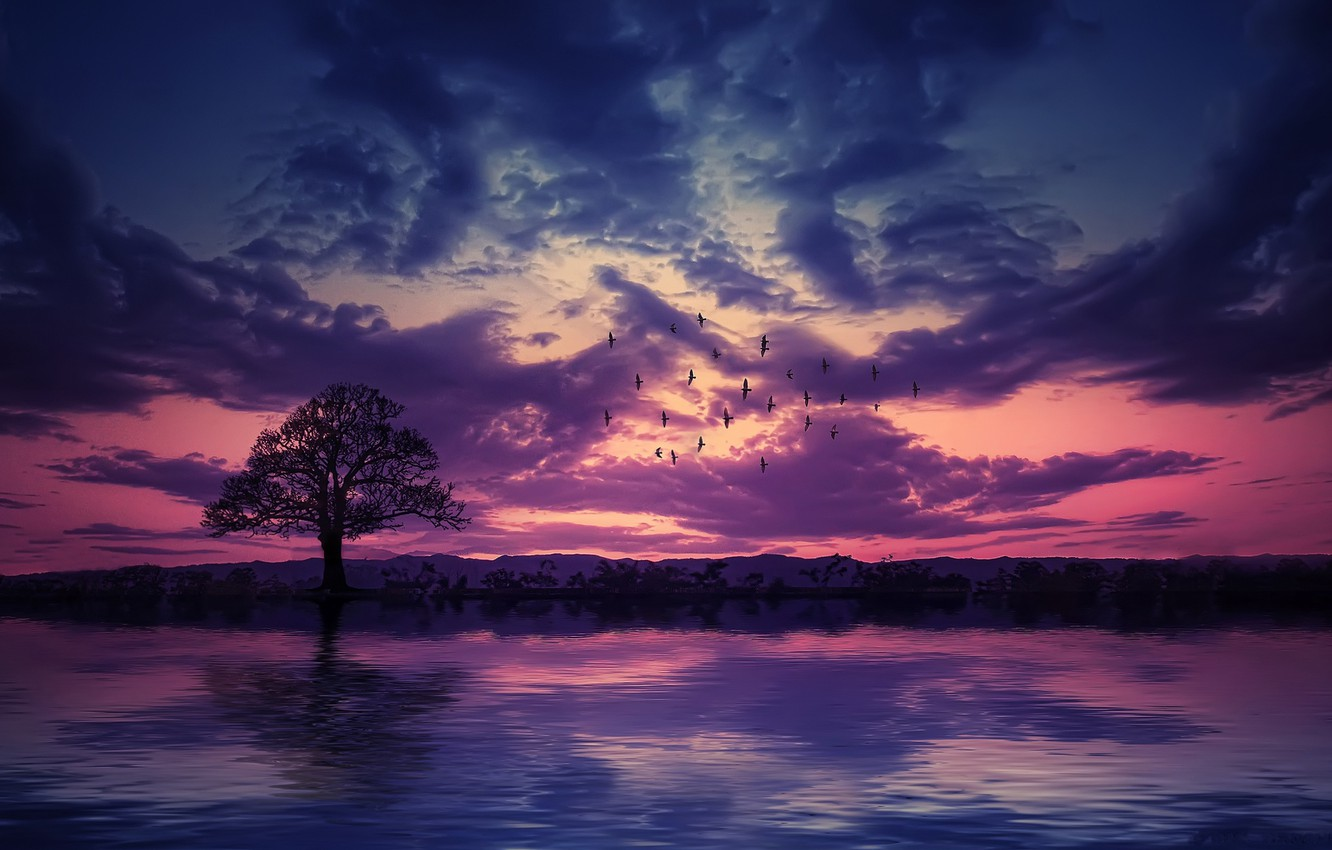 Photo wallpaper the sky, sunset, birds, tree, pond