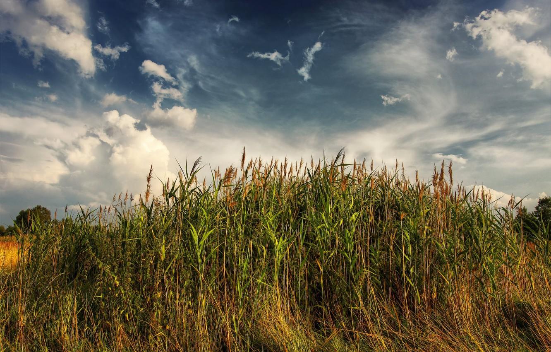 Photo wallpaper landscape, nature, the reeds
