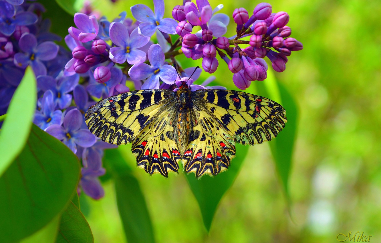 Photo wallpaper Macro, Spring, Butterfly, Spring, Macro, Butterfly