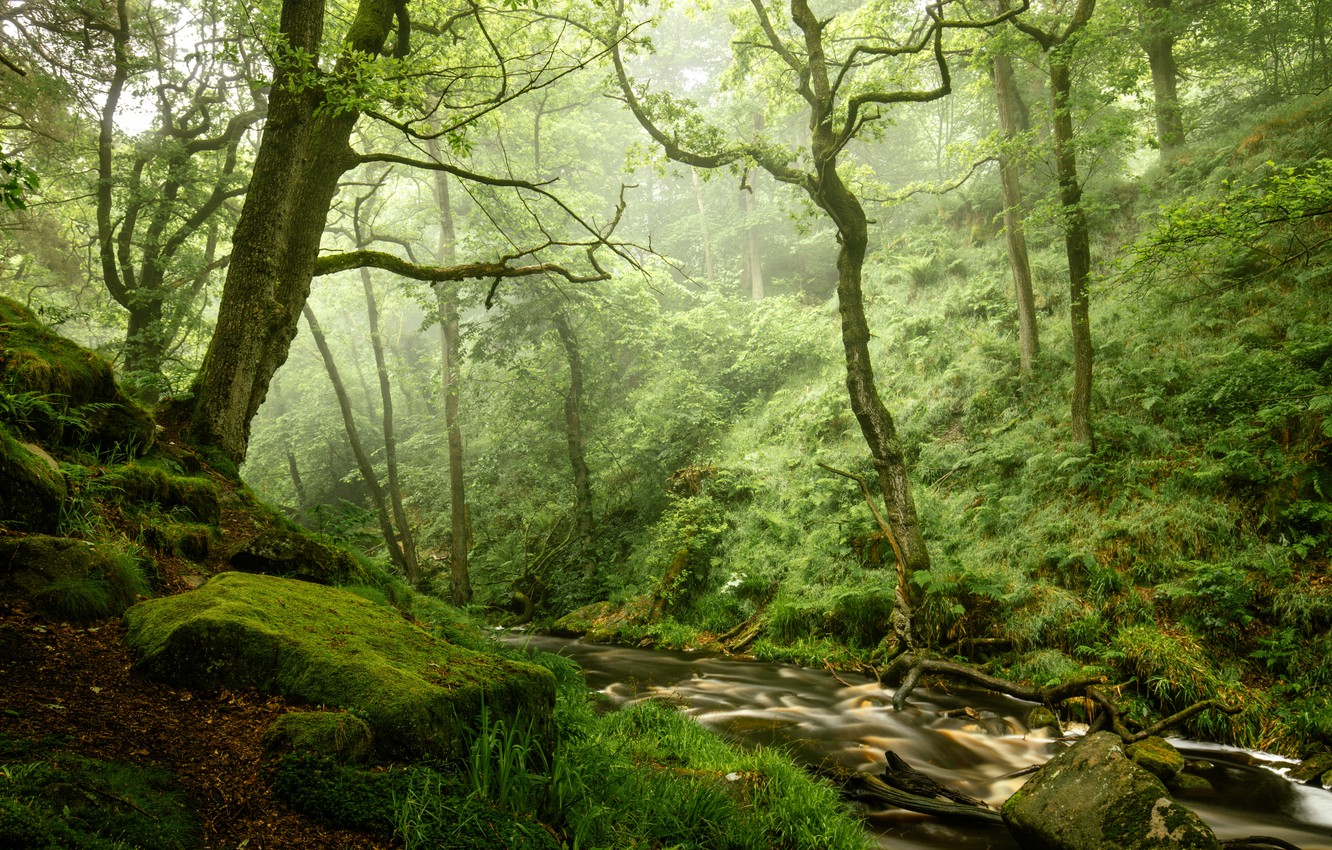 Photo wallpaper forest, stones, moss, river
