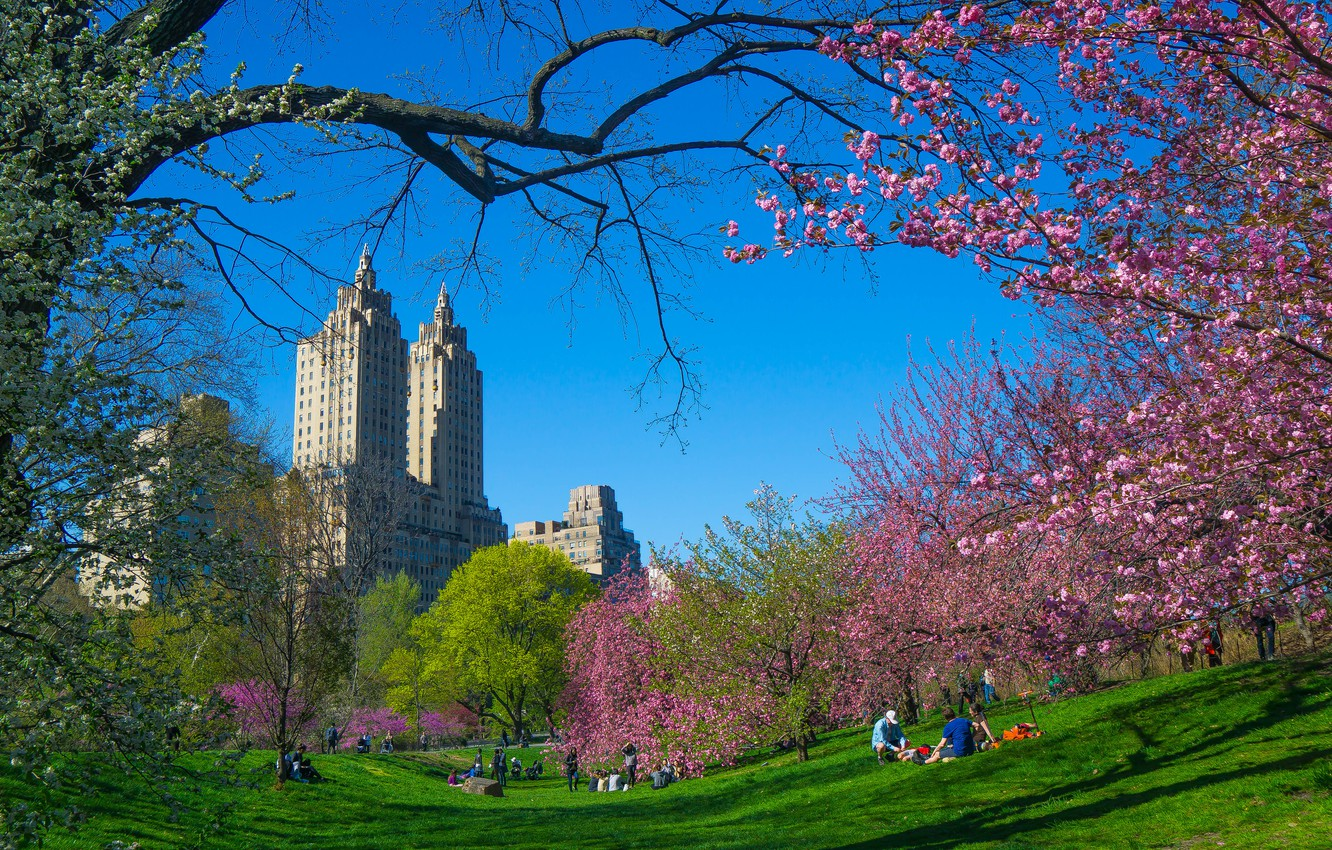 Photo wallpaper trees, branches, the city, spring, New York, USA, flowering, skyscrapers, cherry, Central Park