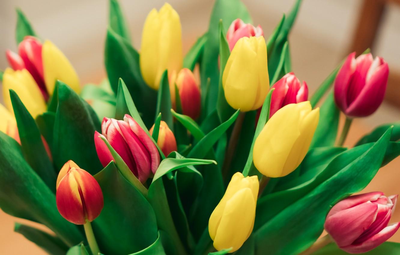 Photo wallpaper beautiful, tulips, bouquet of flowers