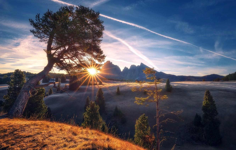 Photo wallpaper mountains, tree, morning