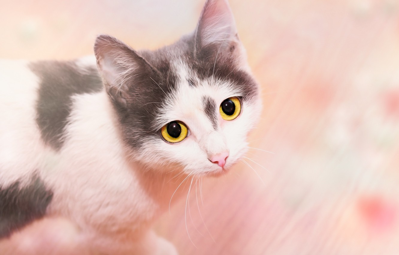 Photo wallpaper cat, look, background, face