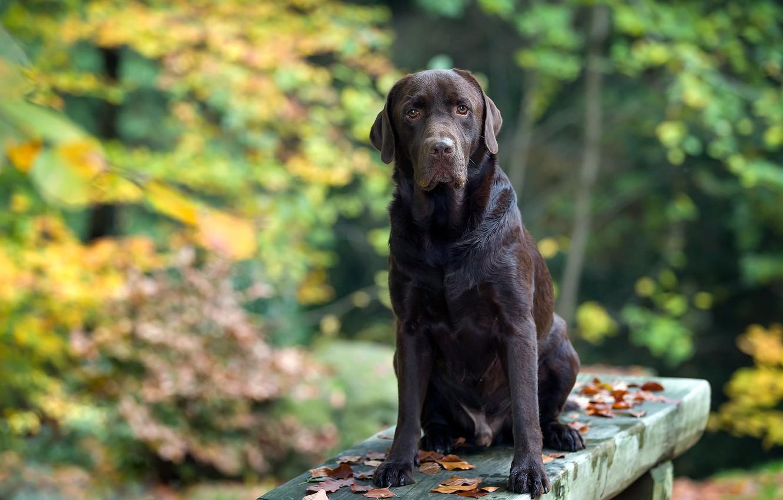 Photo wallpaper autumn, Park, bench, dog