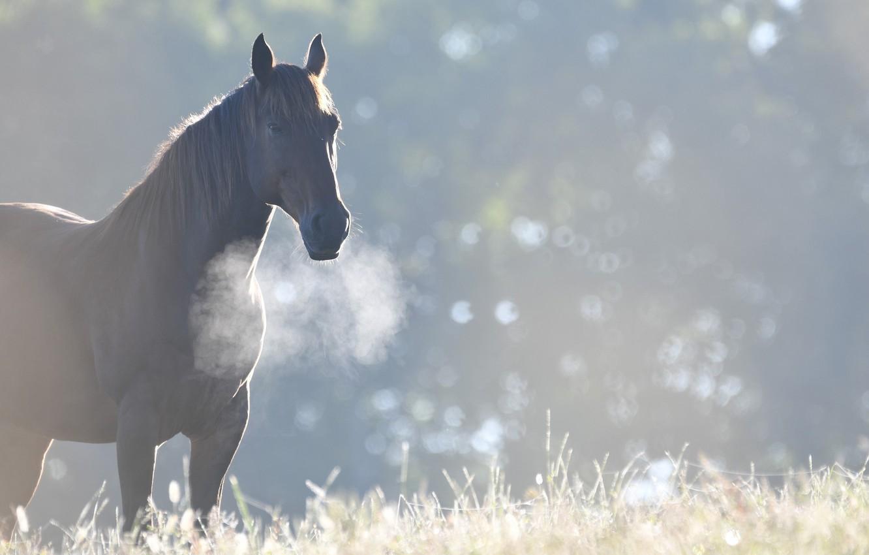 Photo wallpaper horse, horse, morning, cool