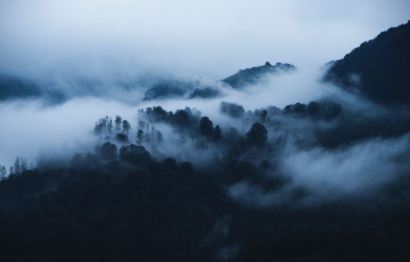 Photo wallpaper forest, trees, mountains, nature, fog