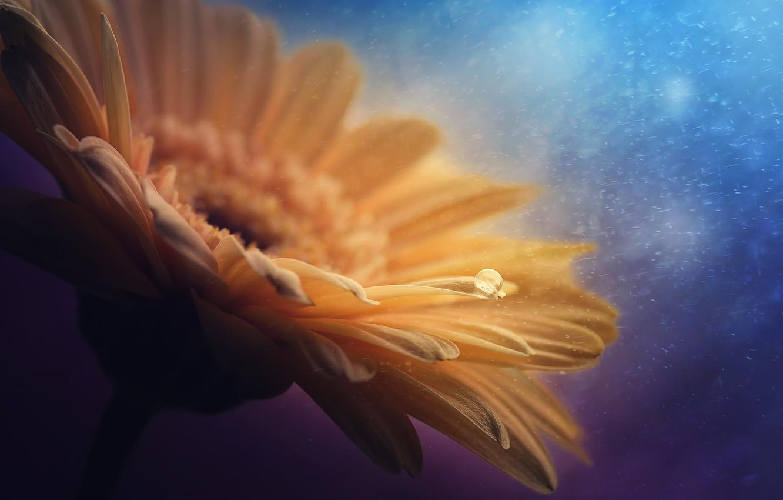 Photo wallpaper flower, macro, nature, petals