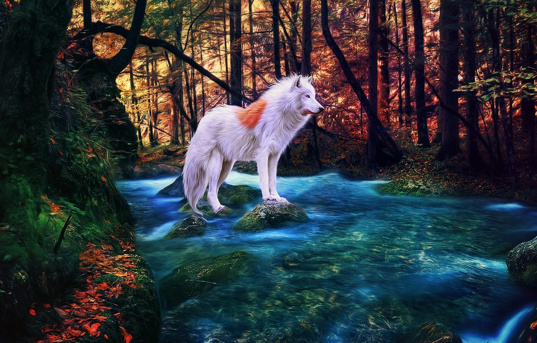 Photo wallpaper autumn, forest, river, albino, white wolf