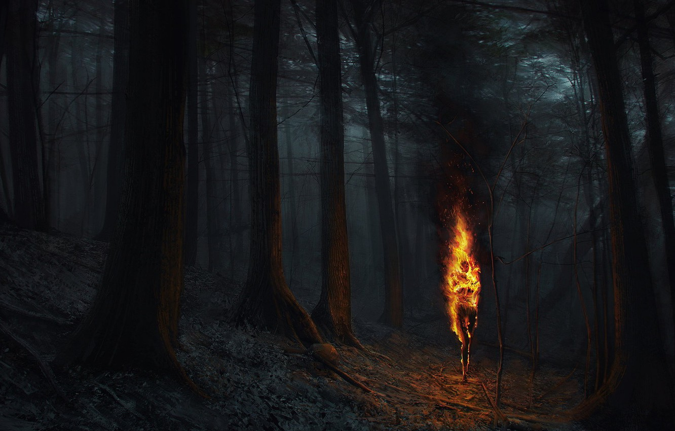 Wallpaper Night Fire Flame Forest Images For Desktop
