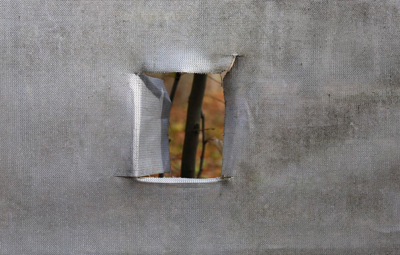 Photo wallpaper nature, window, quarantine, insulation