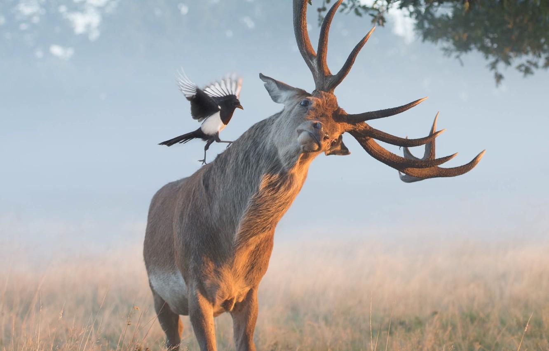 Photo wallpaper grass, branches, nature, animal, bird, deer